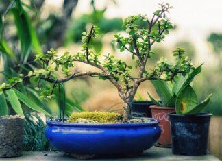 lampy do uprawy roślin